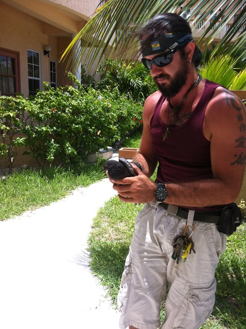 bird rescue by chris summers from aces san pedro belize