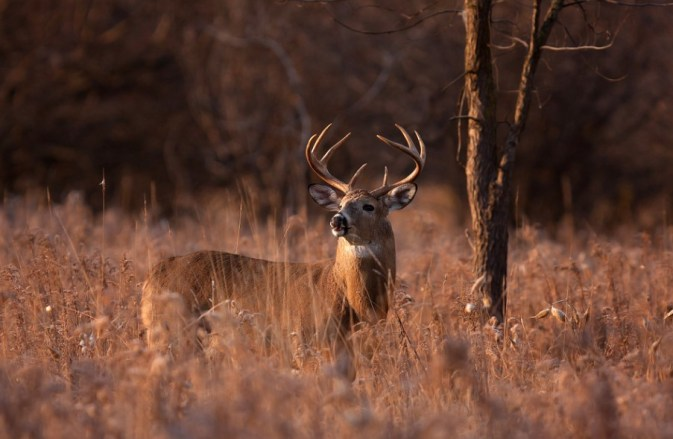 Don't Make These Deer Hunting Mistakes