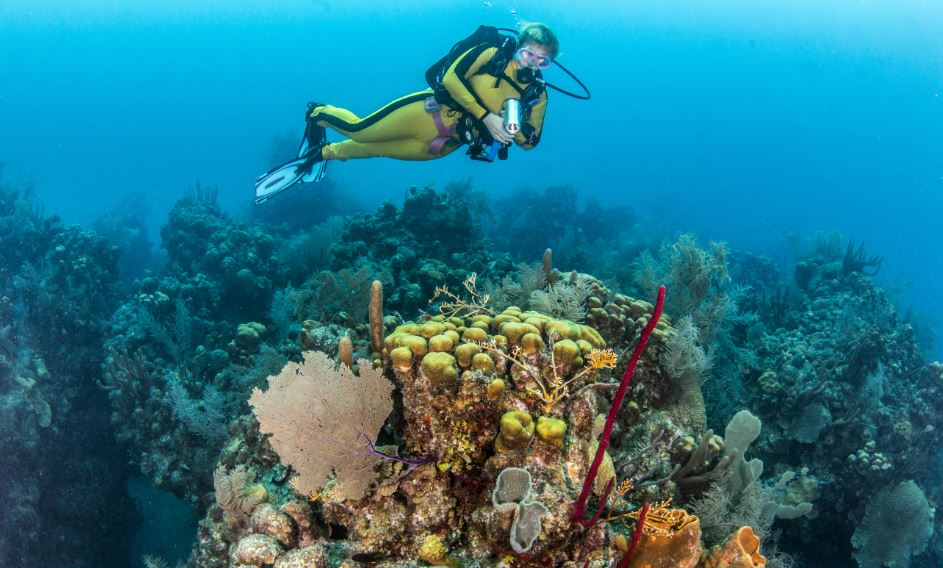 Scuba Diving and Kayaking in Glovers Reef