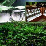 Conoce los pormenores de la industria del cannabis medicinal mediante viaje educativo