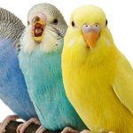 ¿Cómo cuidar a tus pájaros?