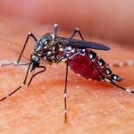 Establecen alianza organizacional para monitorear las poblaciones del mosquito Aedes Aegypti
