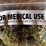 Portavoz de entidad pide que pacientes puedan cultivar cannabis medicinal en sus casas