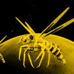 La NASA quiere enviar abejas robóticas a Marte