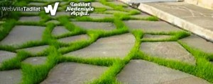Bahçe Yolu