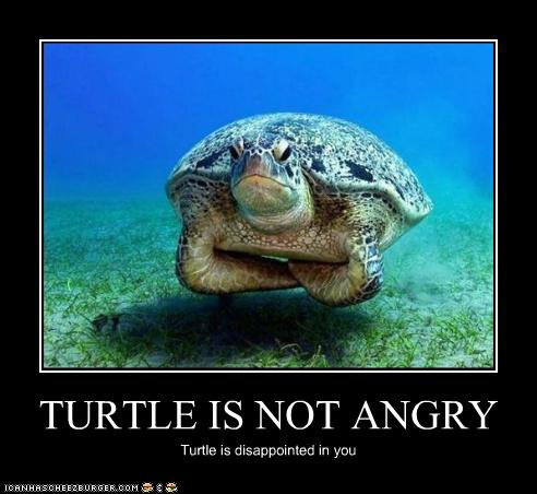 turtle not angry