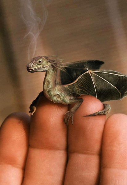 Yes, this is a lovely take on what an Ordinary Farm baby dragon might be...