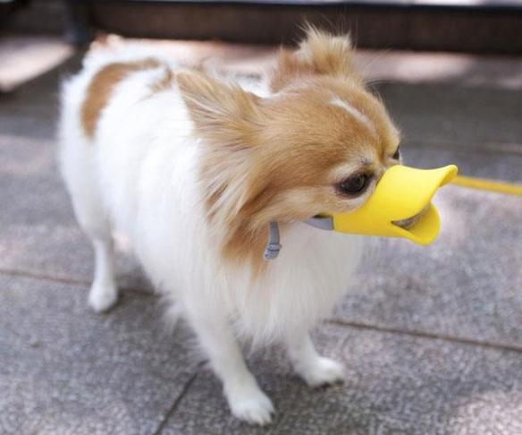Duck-Billed Dog