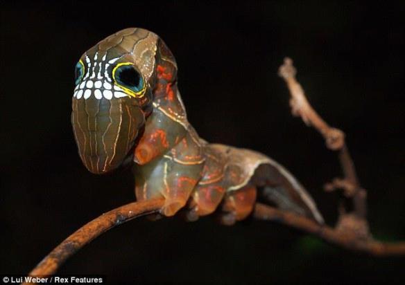 20130519-skull-caterpillar