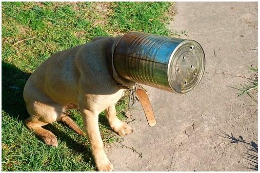 20130620-dog-head-can