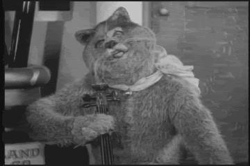 20140526-cat-fiddle