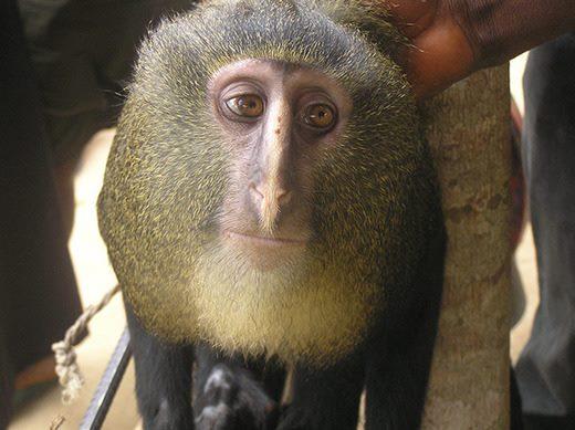20140828-pensive-monkey