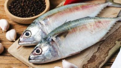 السمك للحامل