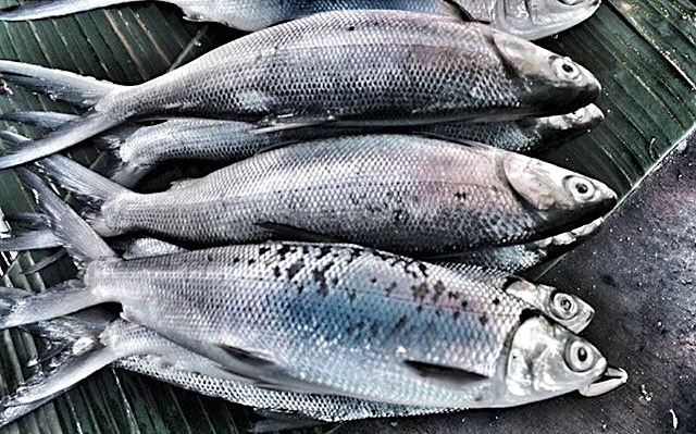 bangus philippine national fish listen to pronunciation