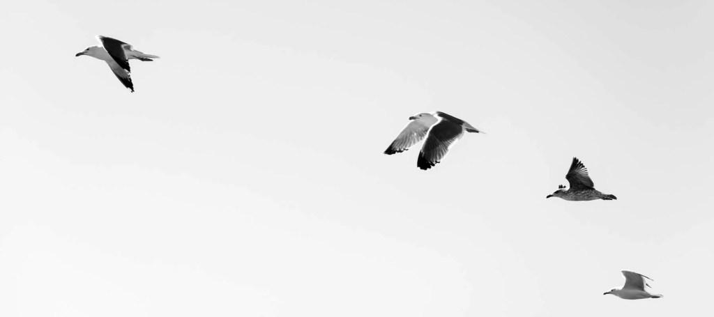 Pássaros voando, seguindo o primeiro