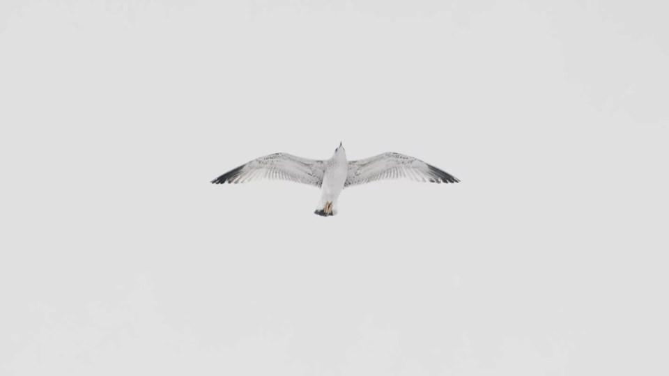 Pássaro voando sozinho
