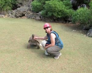 Tortoise petting