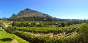 Scenic winery view
