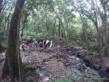 Randonnée : A travers les ananas et les Mape, pour atteindre les trois cocotiers