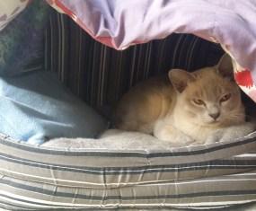 Cute kitten says, 'Wake up sleepy head' – video