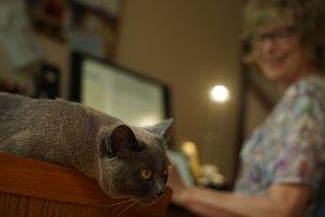 Renovated Website & Cute Cat Series