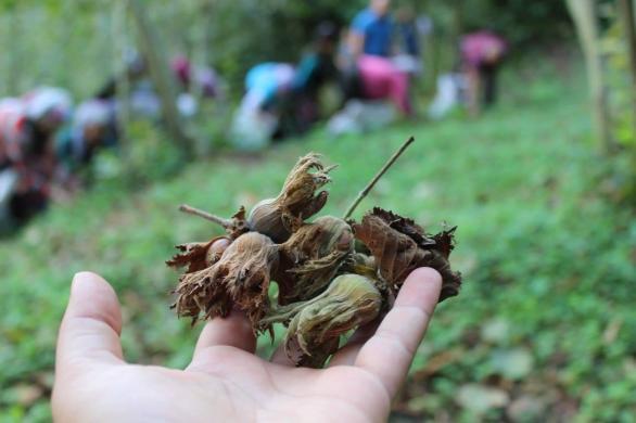 Mevsimlik Çocuk İşçiler ve METİP