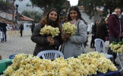 Karaburun Nergis Festivali 26 Ocak 2020