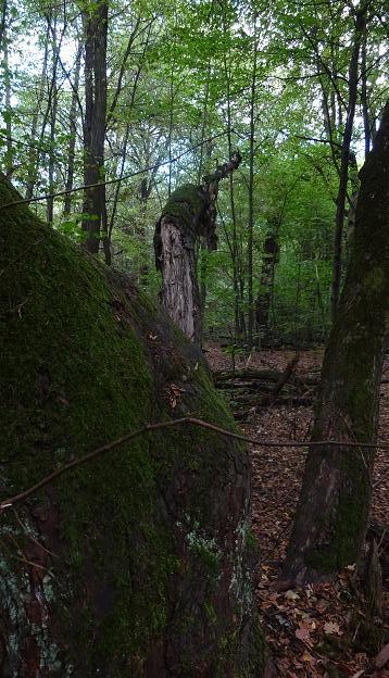 drzewiec niedziela bielany las