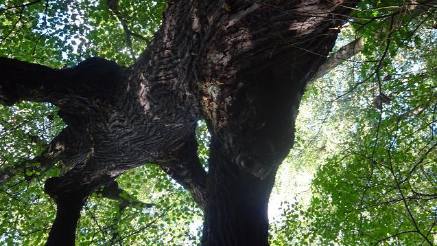 drzewiec 2 niedziela bielany las
