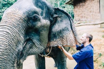 dramblių sanatorija pietų tailande