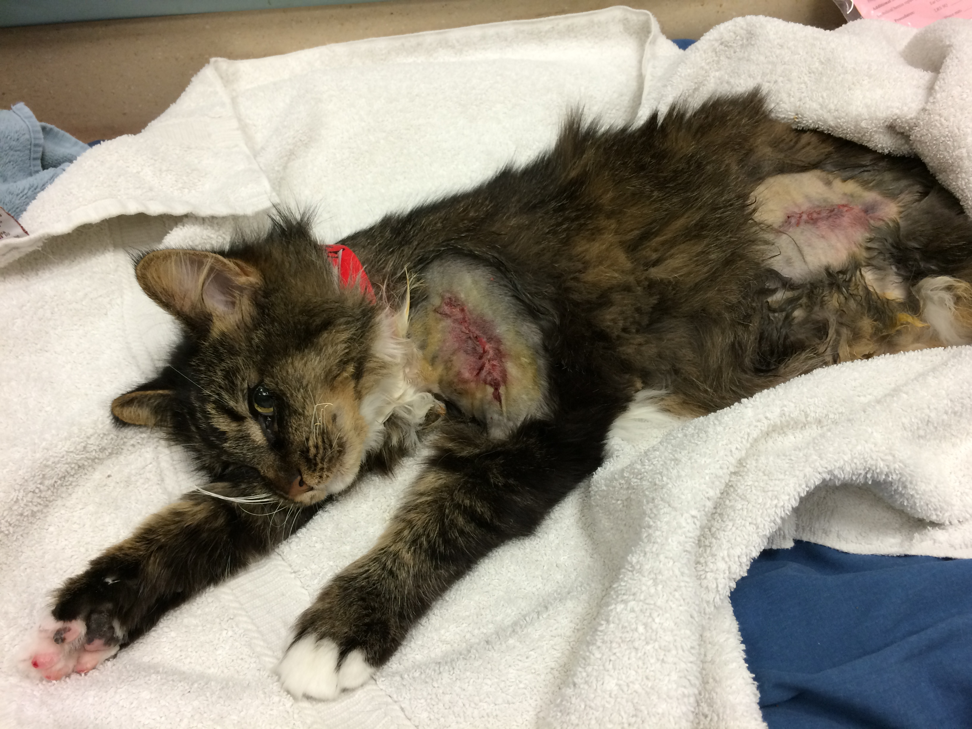 Stowaway Cat Trapped In Car Engine Saved By Officer