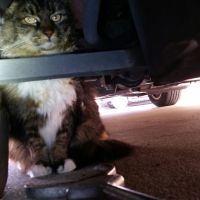 Officer Rescues Stowaway Cat from Hot Car Engine After Sustaining Burn Injuries, Treated at Animal Shelter