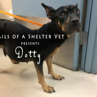 Dotty - Emergency Life-Saving Pyometra Dog Spay