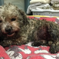Mr. Snuggles - A Miraculous Recovery Following a Vicious Dog Attack