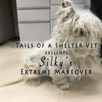 Shelter Dog with Severely Matted Hair Coat Gets Astonishing Makeover