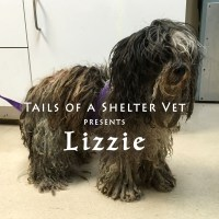 Lizzie's Makeover - Dreadlock Dog Gets Groomed - San Jose Animal Care Center Shelter Vet
