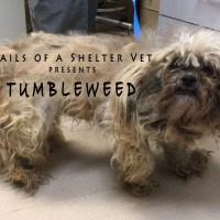 Tumbleweed's Transformation - Doggie Makeover