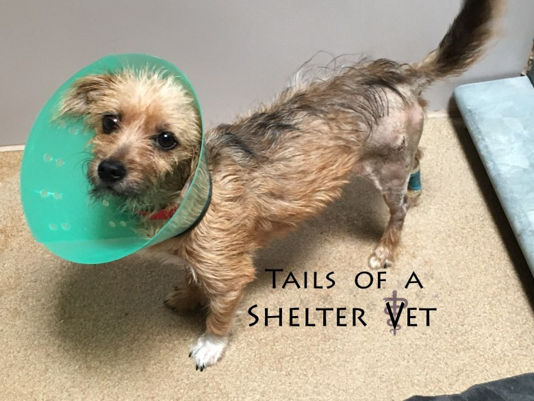 Hit By a Car, Dog Gets Back on Four Paws with Help from Shelter's Vet Team