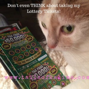 Kali-Ma the Cat with her Lottery Tickets!