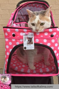 Kali-Ma the Cat Cat Therapy Stroller