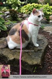 The Calico Cat Life