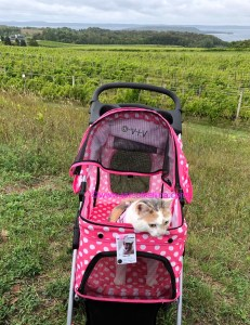 Tips For Vacationing With Your Cat