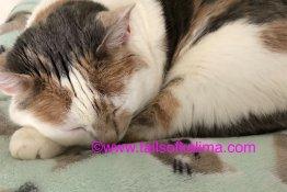 Cat Comfort In Grief