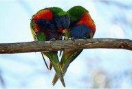 animal_love_09