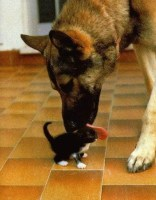 cute_kitten_dog