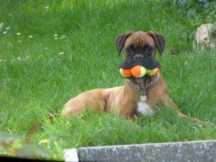 life-tough-get-dog-191