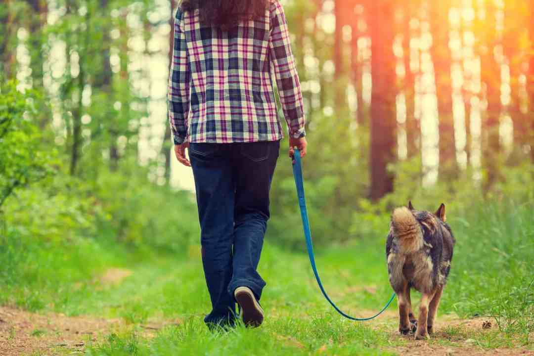 Woman and dog enjoying a loose lead walk together through the woods