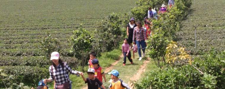 台東一日農遊,暑假體驗採茶、做蛋捲、賞田園風光