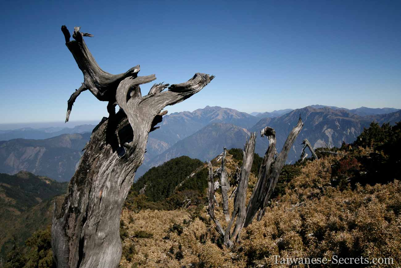 taiwan alpine vegetation