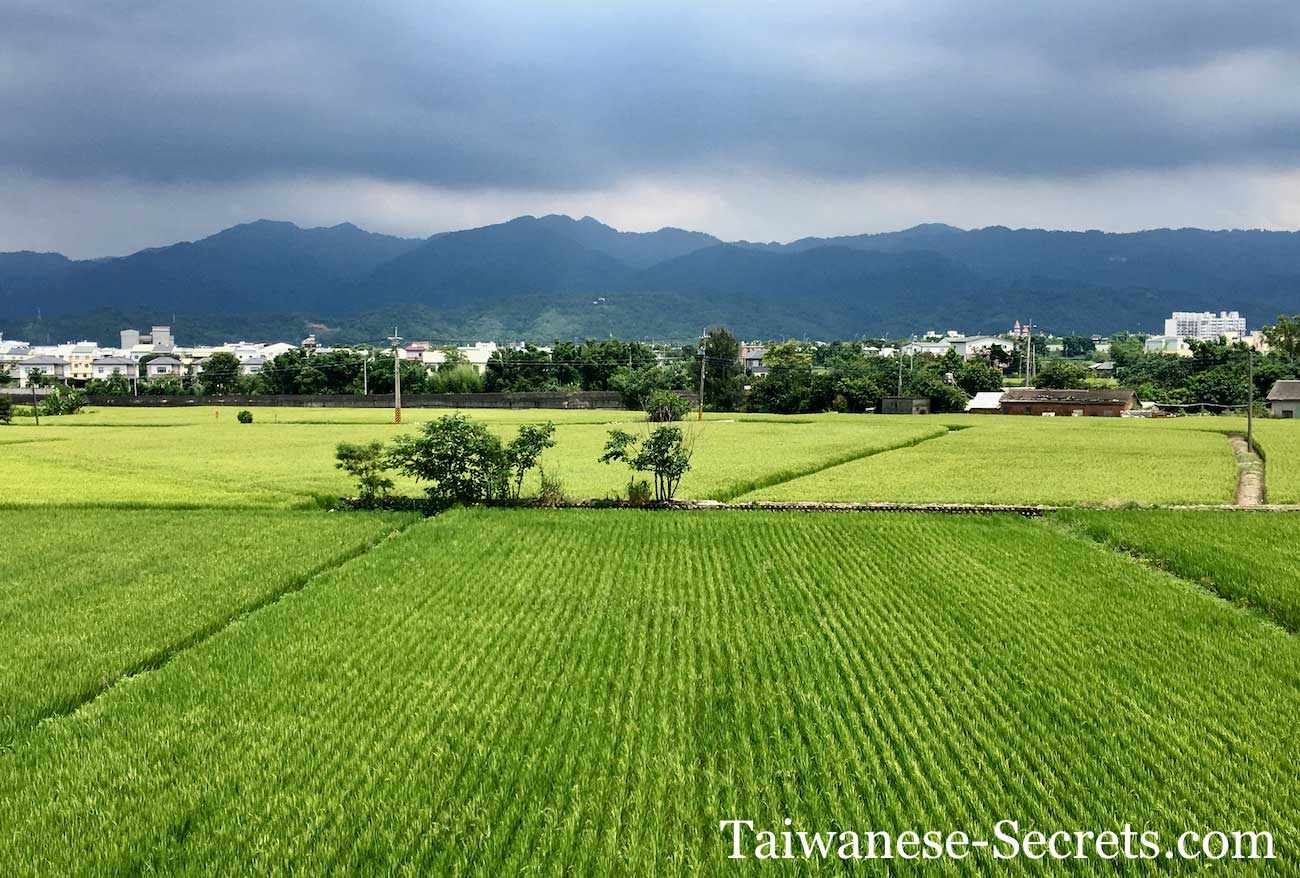 Miaoli County Rice Field